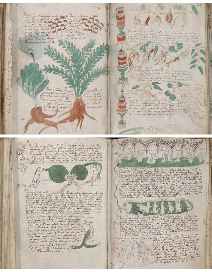 voynich-voynick manuscript (2)
